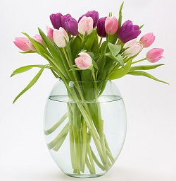 tulips-px-250